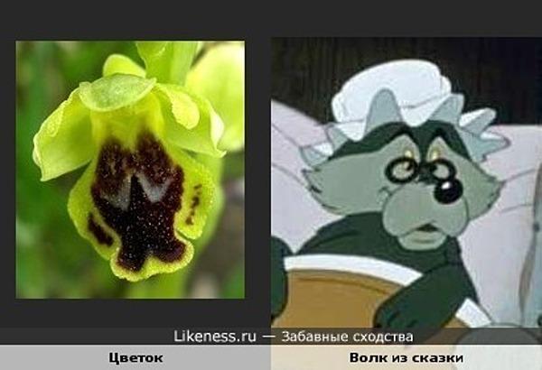 Орхидея и Волк в образе Бабушки