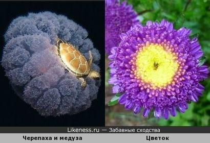 Черепаха верхом на медузе и цветок