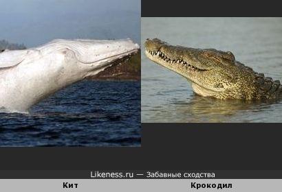 Кит и крокодил