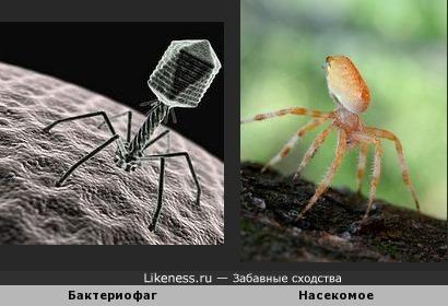 Вирус и насекомое