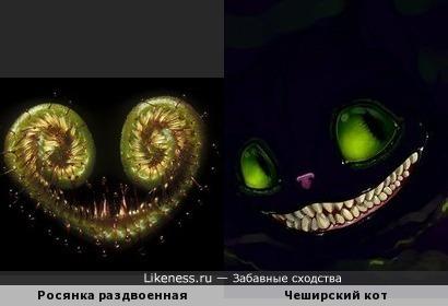 Чеширские улыбки