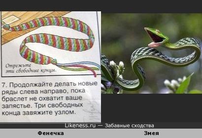 Змея Фенечка