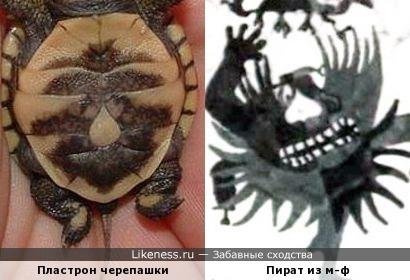 """Рисунок на брюшке маленькой черепахи напомнил Пирата из м-ф """"Голубой щенок"""""""