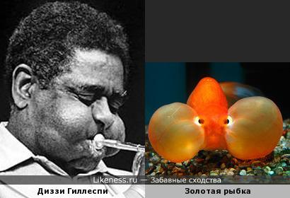 Золотой трубач и золотая рыбка