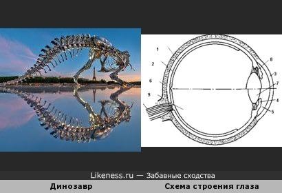 Скульптура динозавра с отражением похожа на схему строения глаза