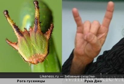 Гусеница-рокерша