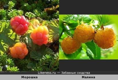 Солнечные ягоды