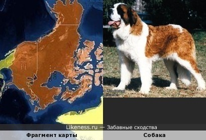 Фрагмент карты напомнил какое-то животное (например, собаку)