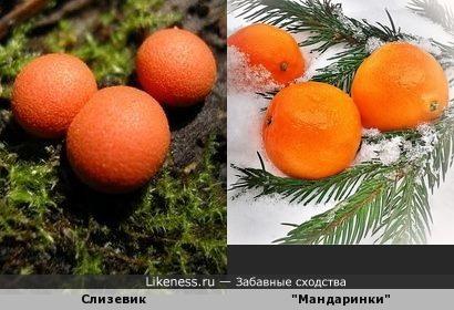 Любовь к трём мандаринам(?)