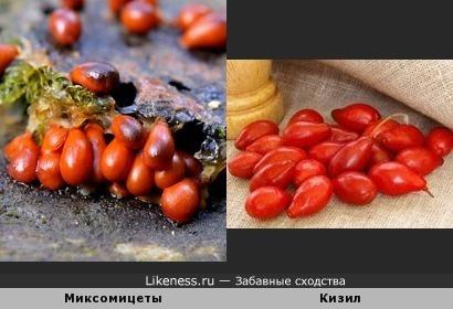 """Кизил - значит """"красный"""""""