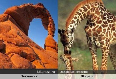 Необычная форма песчаника напомнила длинношее животное (жирафа или динозавра)