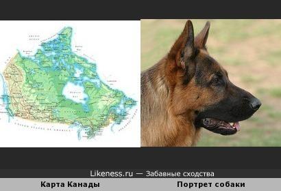 Ещё один портрет собаки на карте мира