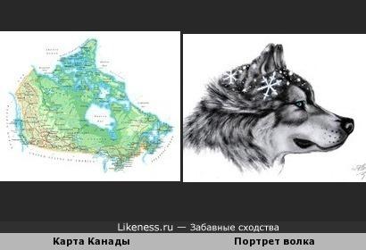 Волк из Канады