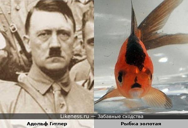 Адольф-рыбка (она не виновата!) и Гитлер
