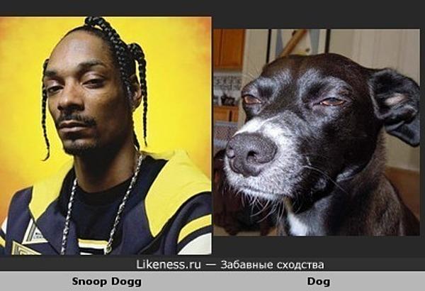 Снуп дог похож на собаку