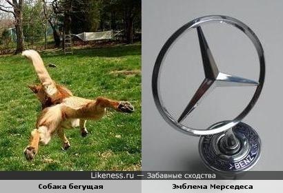 Вид бегущей собаки напоминает эмблему Мерседеса