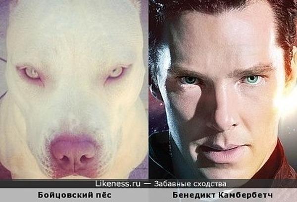 Шерлок сам как собака Баскервилей :)