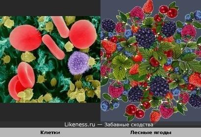 клетки и ягоды