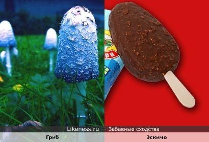 гриб похож на эскимо