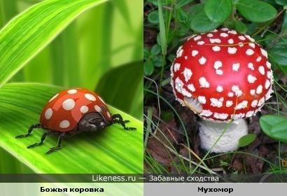 похожи расцветкой)))))))))