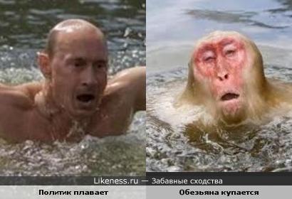 Политик и обезьяна