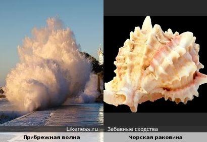 Прибрежная волна напомнила морскую раковину