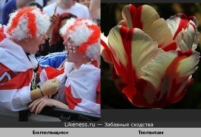 Болельщики сборной Англии по футболу и тюльпан
