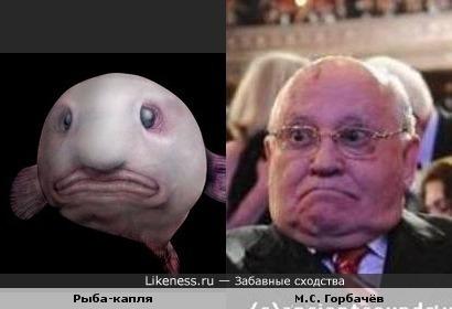 М.С. Горбачёв и рыба-капля