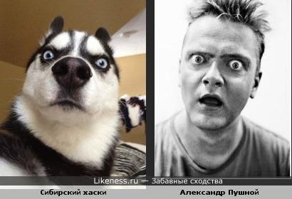 Сибирский хаски и Александр Пушной..