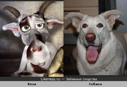 """Персонажа м/ф """"История козы: Легенды старой Праги"""" рисовали с этой собаки"""