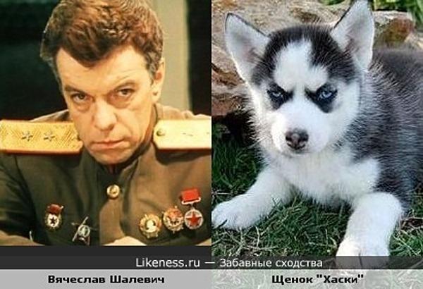 """Актёр Вячеслав Шалевич и щенок породы """"Хаски"""""""