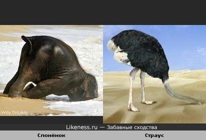 Страус и слонёнок