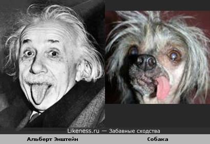 Альберт Энштейн и собачка