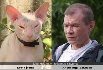 Актёр Александр Баширов и кот-сфинкс
