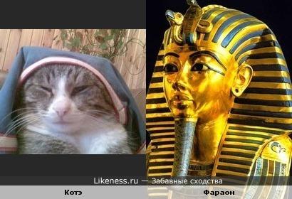 Котэ-Фараон
