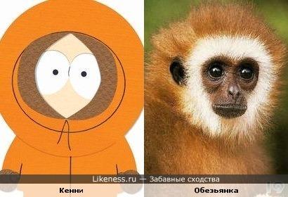 Обезьянка похожа на Кенни