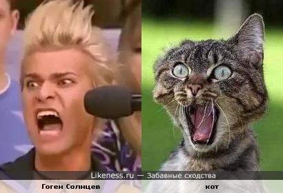 Гоген Солнцев (адвокат) и кот похожи.