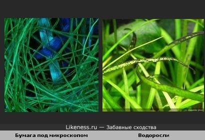 Бумага под микроскопом похожа на водоросли.