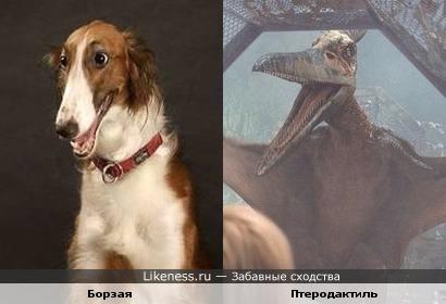 Собака породы борзая и птеродактиль