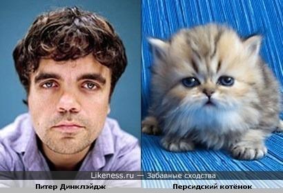 По-моему, Питер Диклэйдж похож на персидского котёнка =)