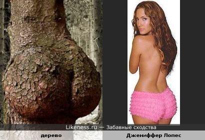 Нарост на дереве похож на нижнюю часть спины Джениффер Лопес