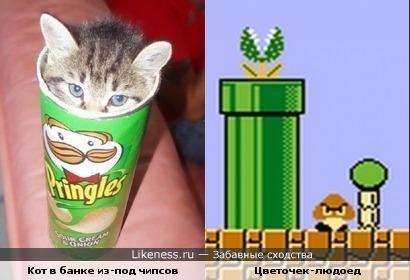 Котик похож на хищное растение