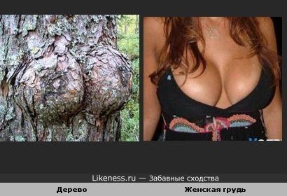 Дерево похоже на женскую грудь