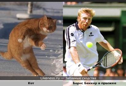 Кот похож на Бориса Беккера