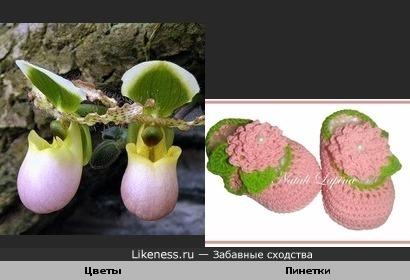 Цветы похожи на пинетки
