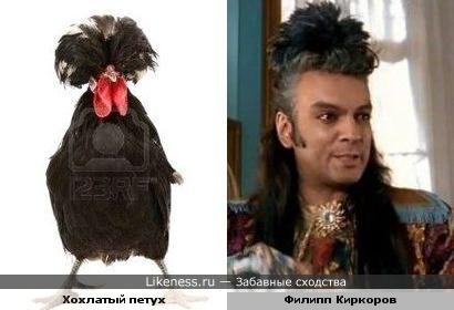 Филипп Киркоров похож прической на черного хохлатого петуха))