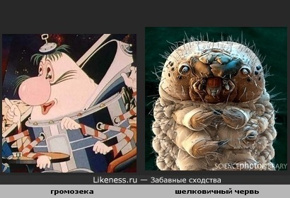 громозека похож на шелковичного червя