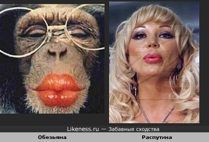 обезьяна и маша