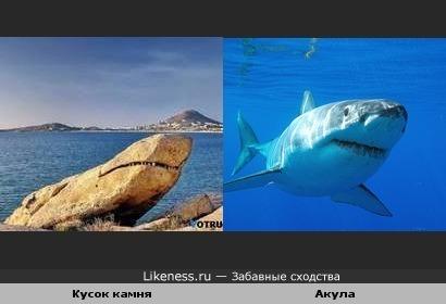 Кусок камня похож на акулу