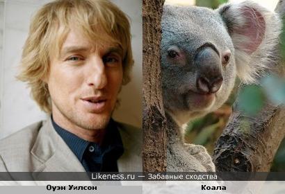 Не вешай нос, коала! Бери пример с Оуэна Уилсона
